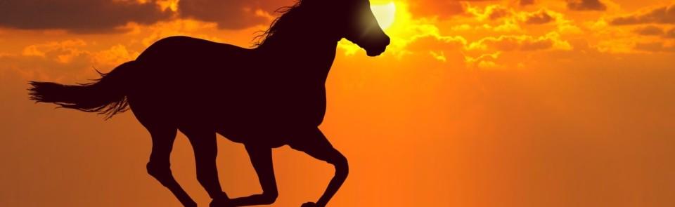 Equine-Etiquette-Slider-Page-1