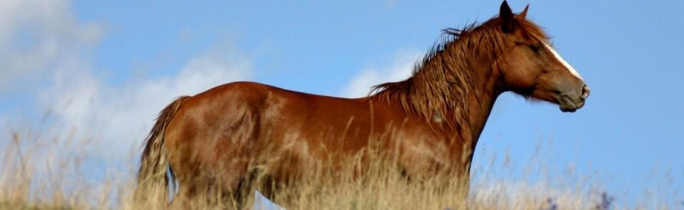 Equine-Etiquette-Slider-Page-2
