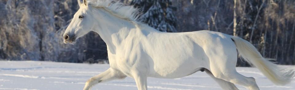 Equine-Etiquette-Slider-Page-3